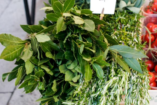 Bay leaves, safe, rosemary, thyme - the flavors of Venice